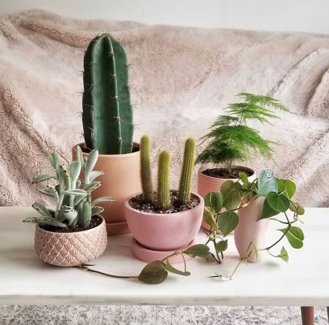 What does it mean when giving a cactus