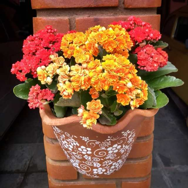 Succulents with Orange Flowers
