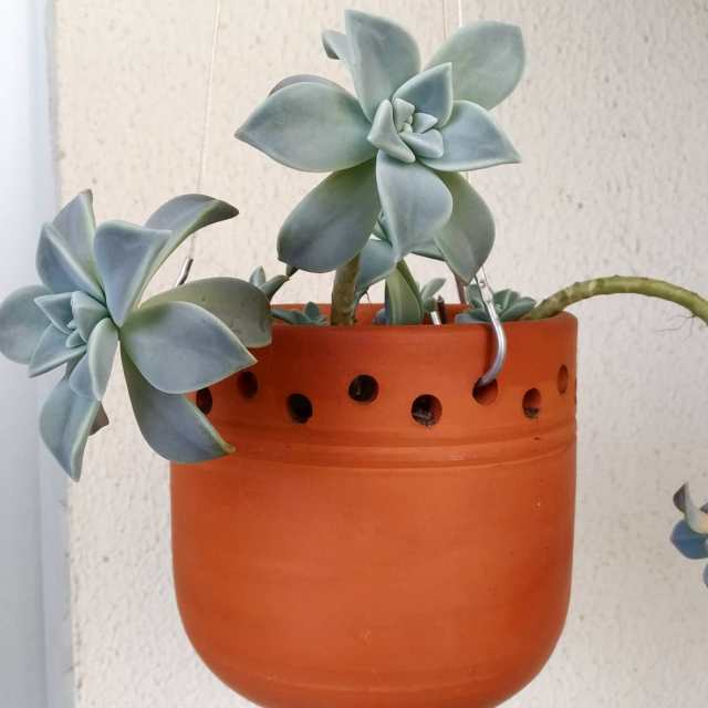 succulents you wish you had for work