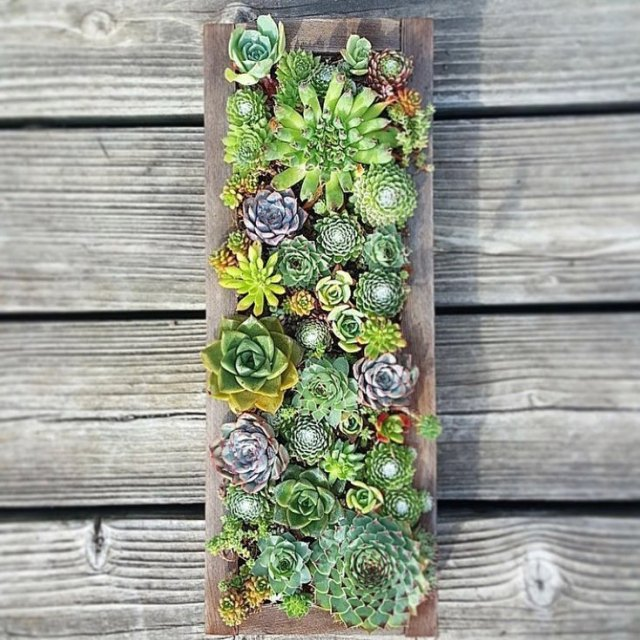 How To Prune Succulents