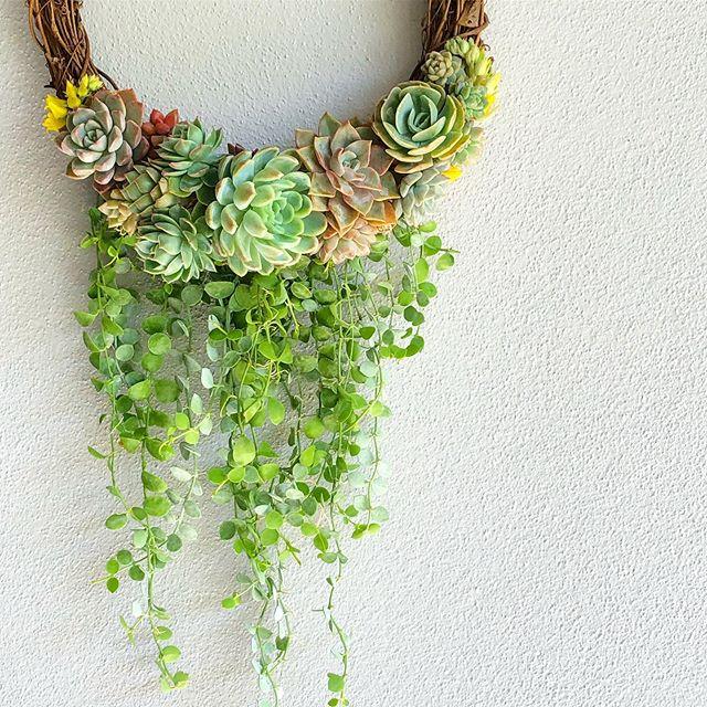 8 Amazing Succulent Gift Ideas