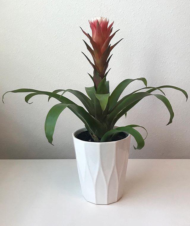 8 Beautiful Succulents That Flower
