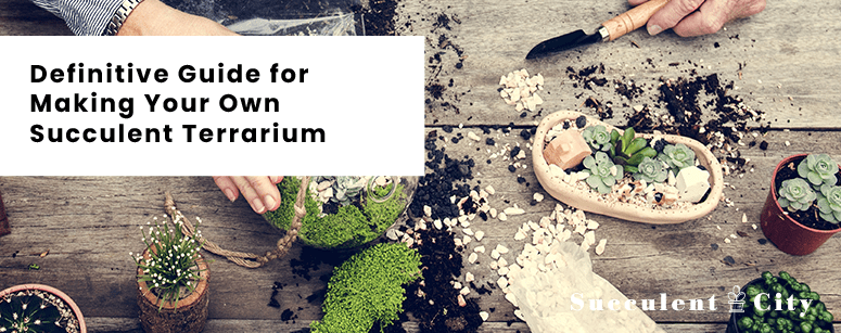 A Definitive Guide For Making Your Own Succulent Terrariums