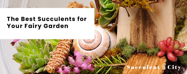 Best succulents for your fairy garden