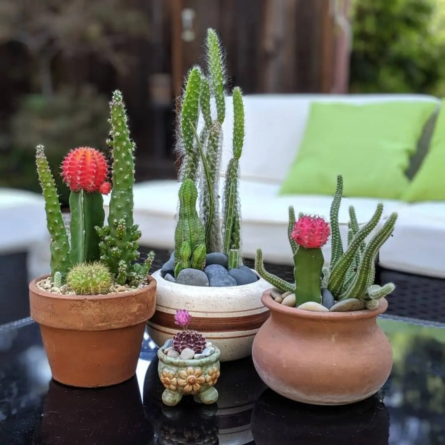 9 Flowering Succulents for Indoors