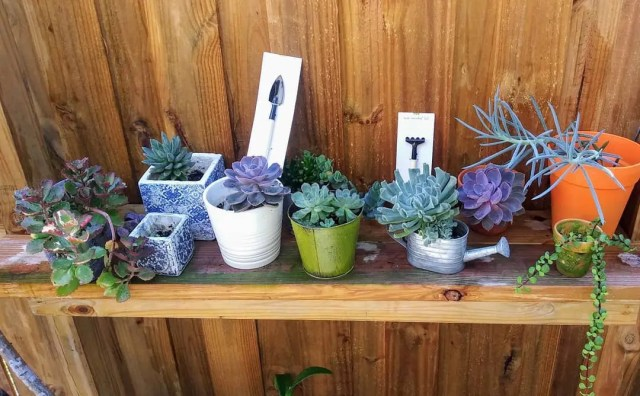 7 Mini garden hand tools for your succulents