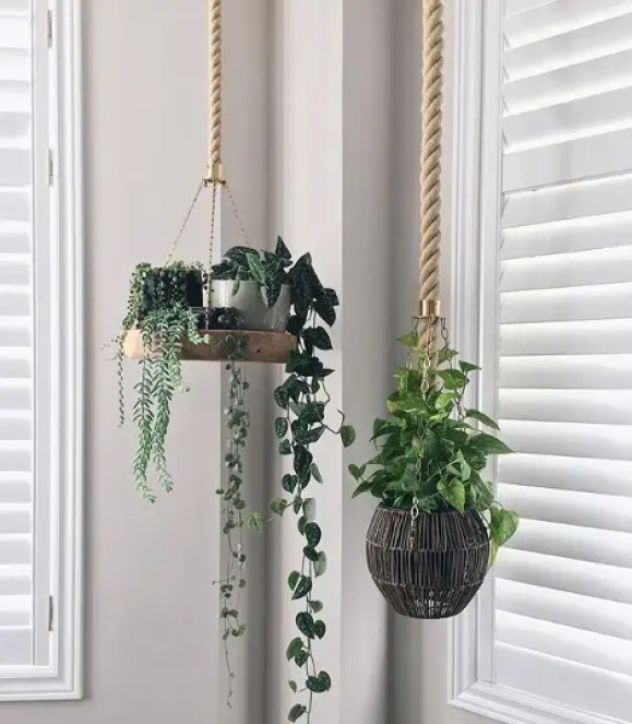 The Lovely String of Hearts Succulent – Ceropegia Woodii