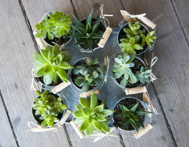 How to Propagate Succulents from Leaves and Cuttings
