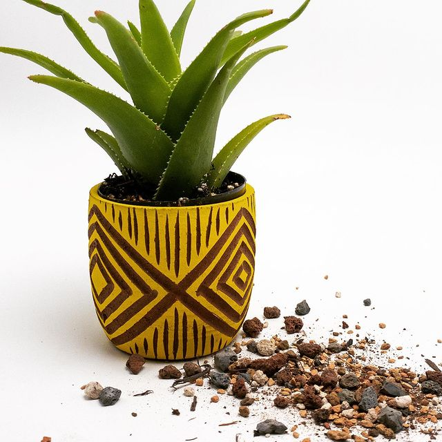 4 Reasons Why Specialized Succulent Soil is the Best for Growing Succulents-Succulents Thrive Best in Fast Draining Soil