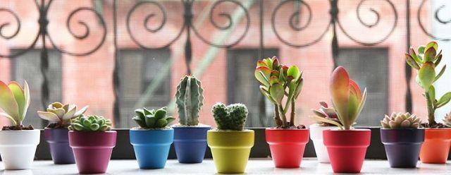 new york succulents