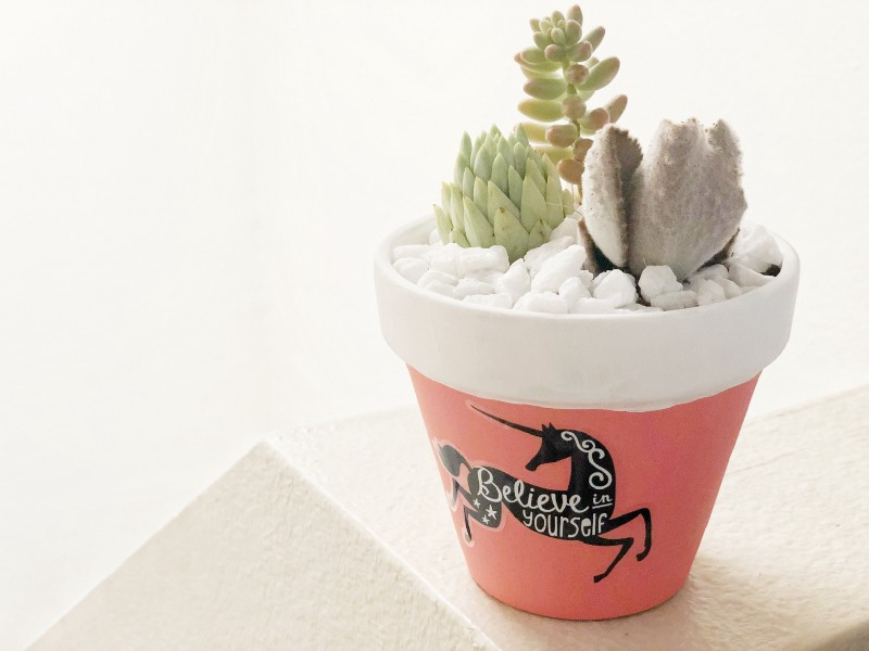 Vinyl Decal Succulent Pot