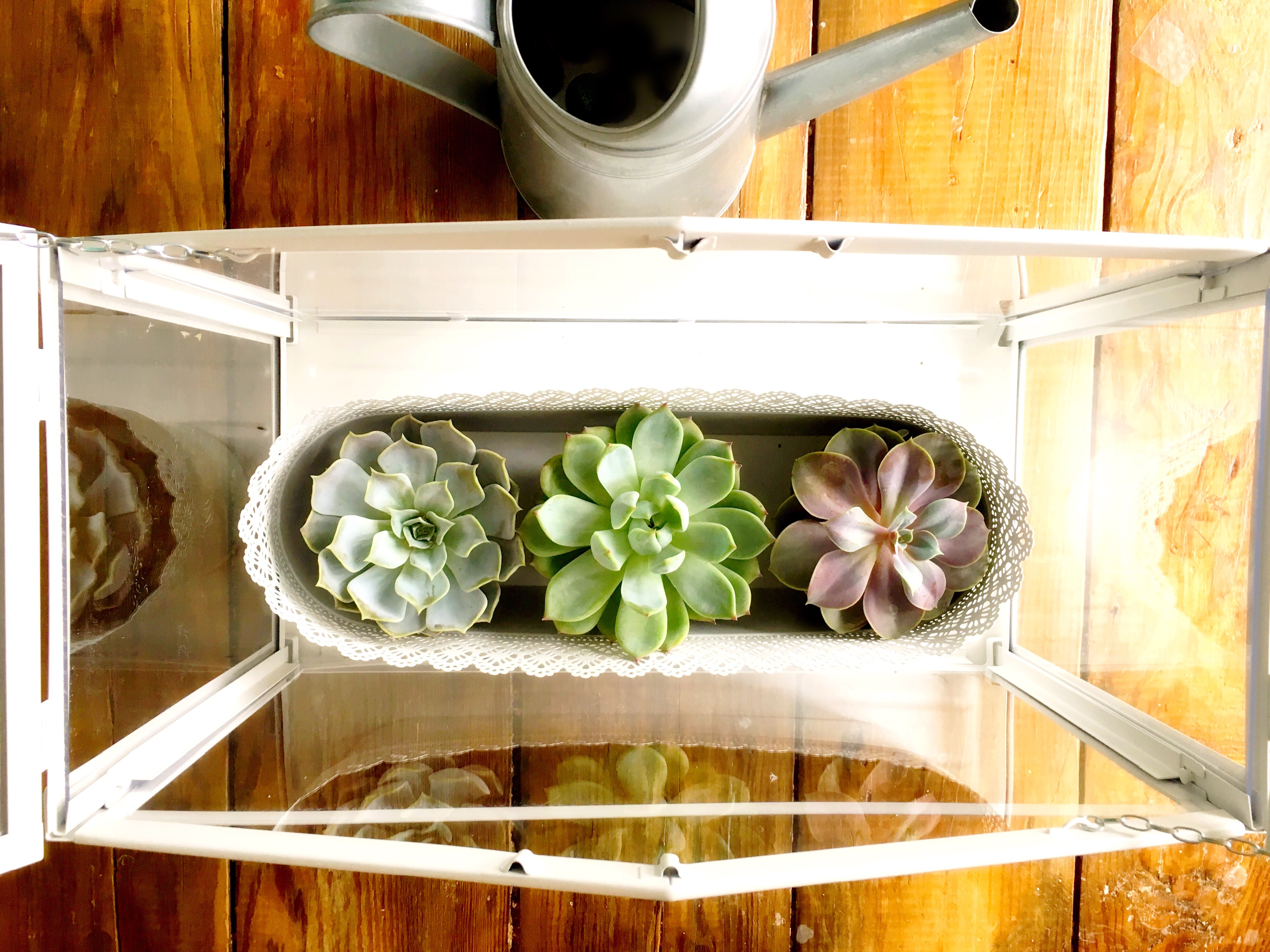How To Water Your Succulents Without Killing Them: The Complete Guide
