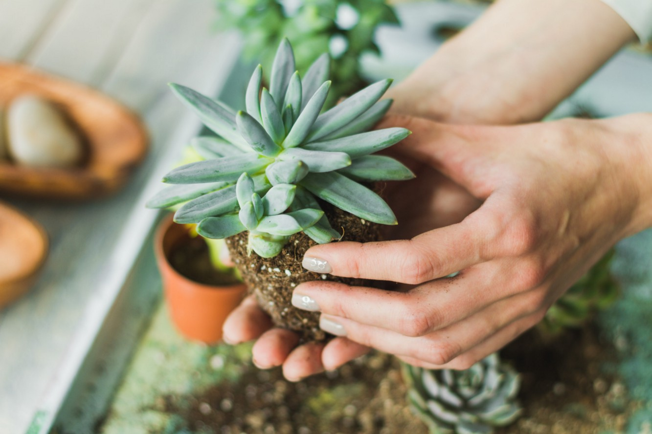 How to Revive Your Busted Succulents