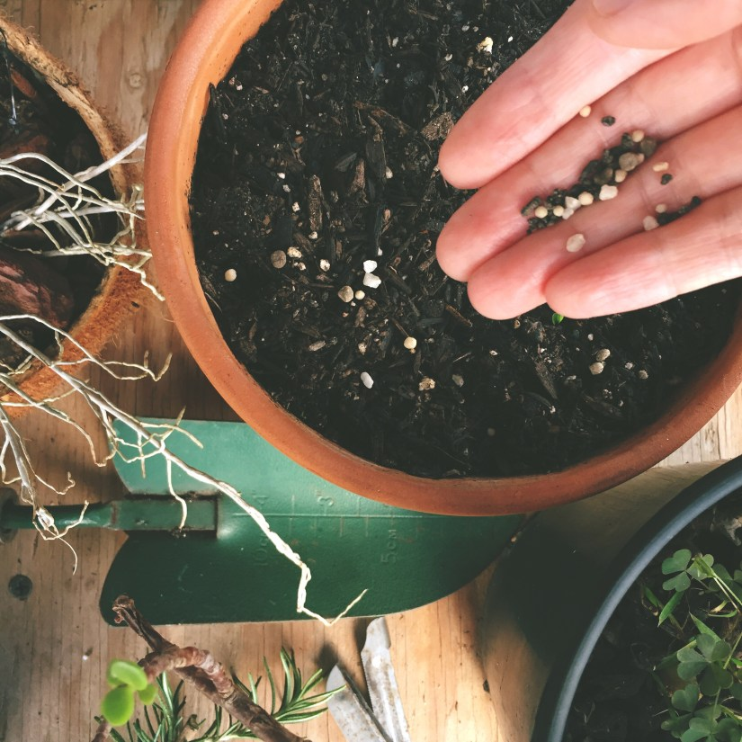Adding fertilizer to soil in potted plant.