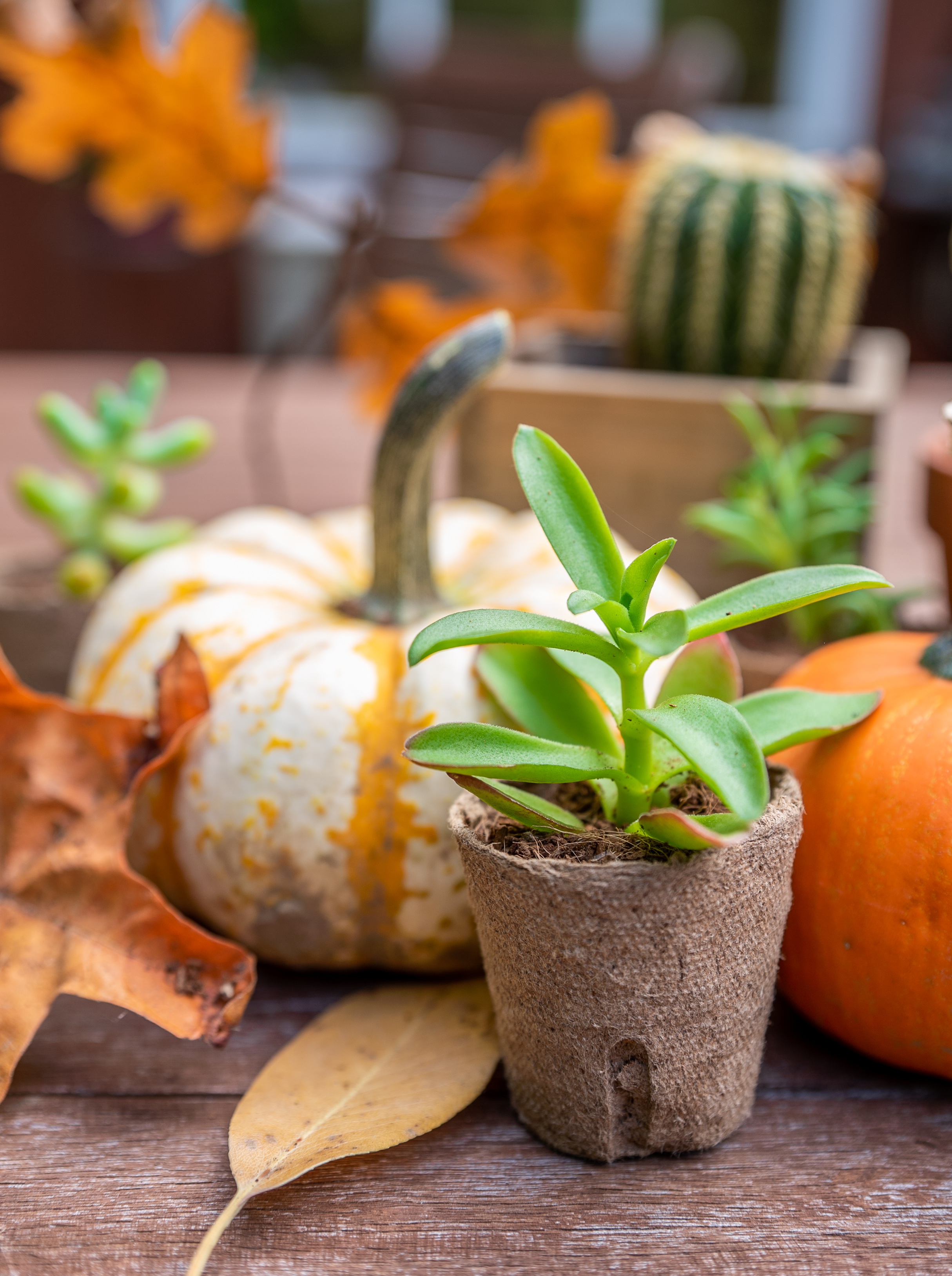 Autumn Checklist: Prepping for Seasonal Change