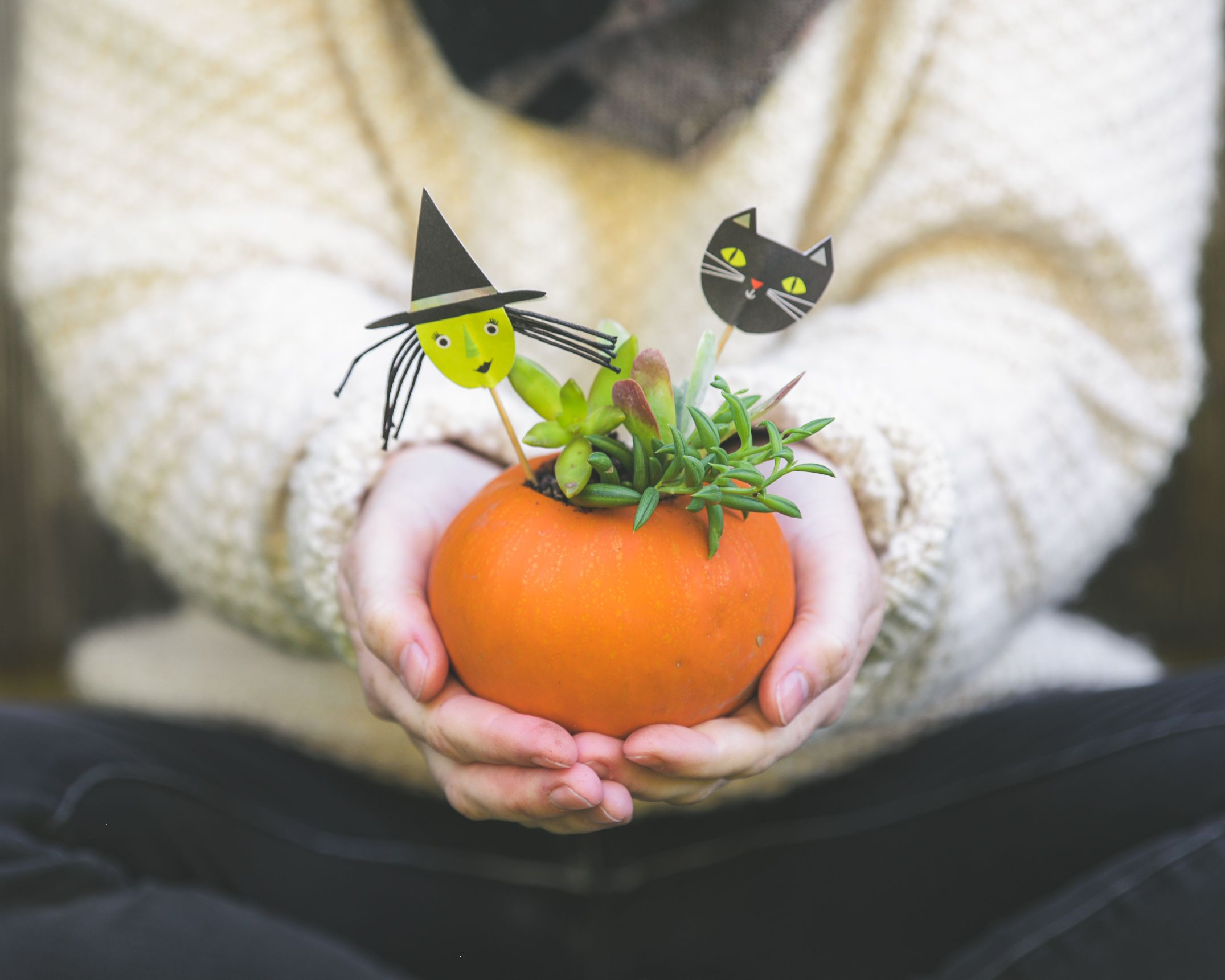 Succulent Pumpkin Planter: How to Make the Perfect Pumpculent