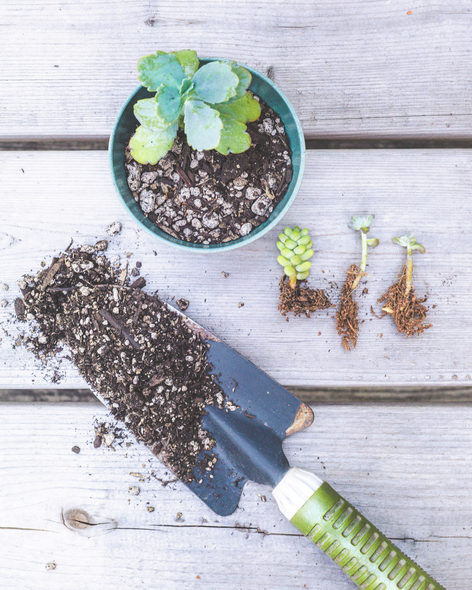 Repotting Succulents: A How-To
