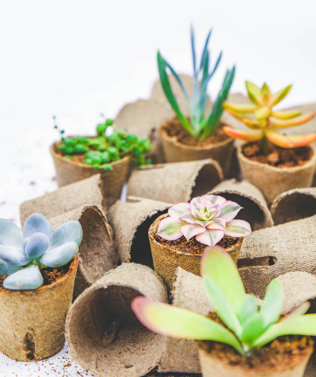 Biodegradable Pots: All Your Questions, Answered