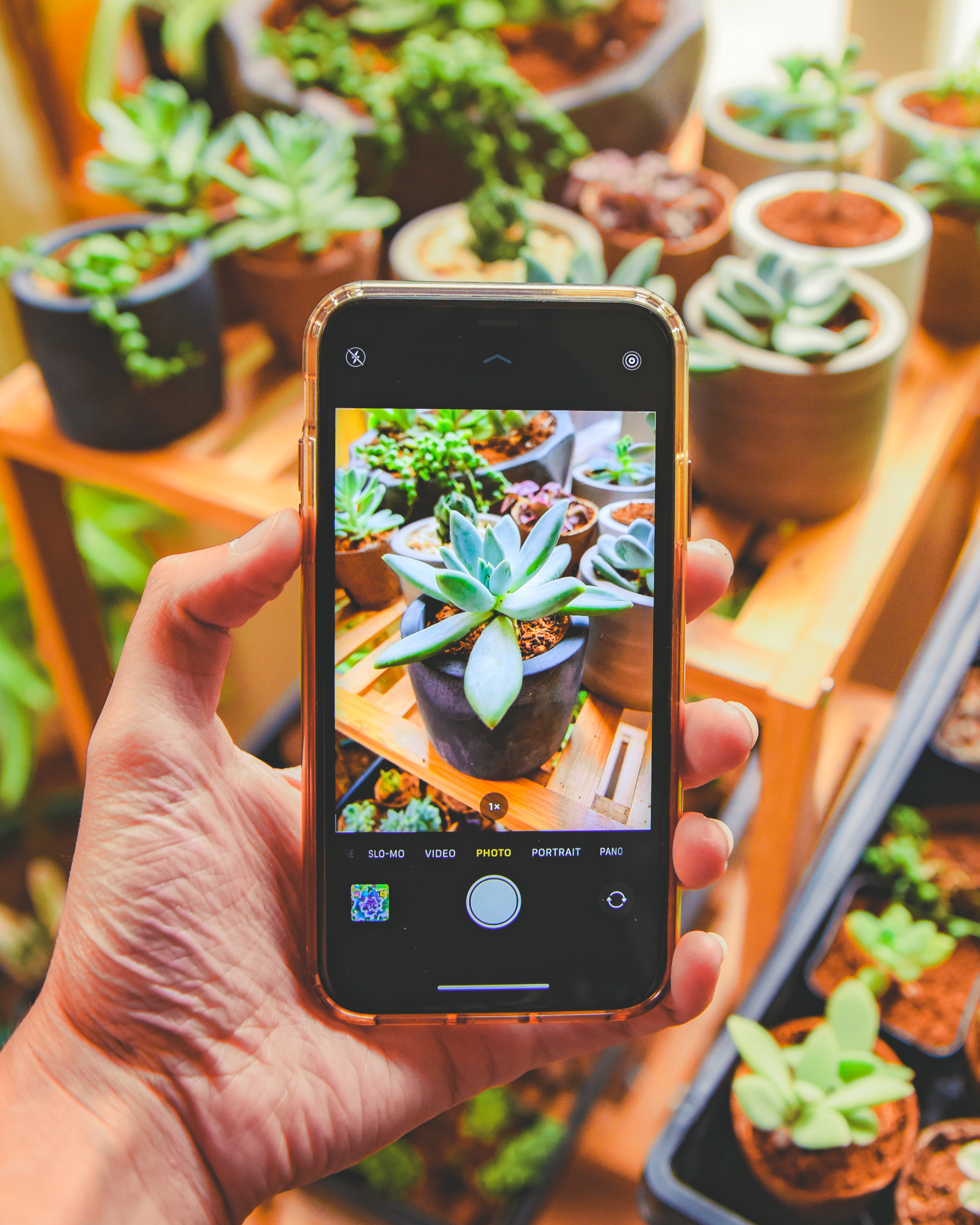 5 Expert Tips to Capture Your Succulents' Best Angles
