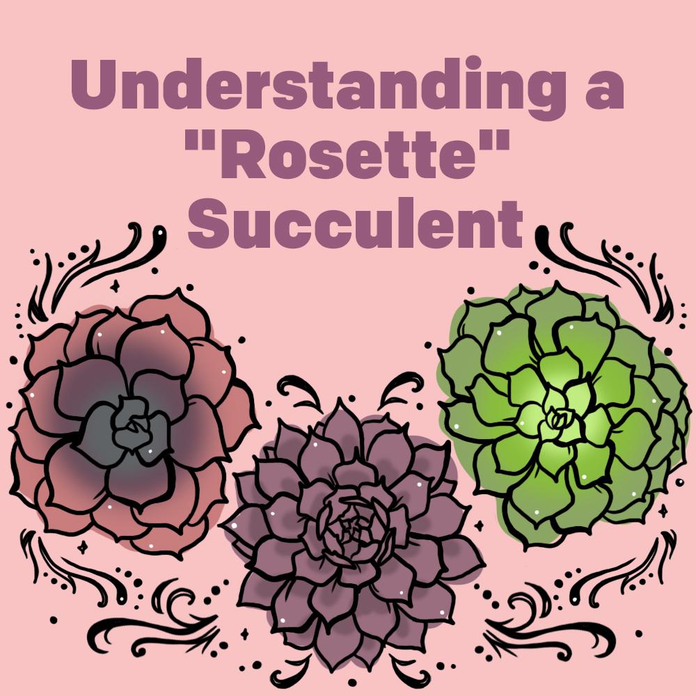 """Understanding a """"Rosette"""" Succulent"""