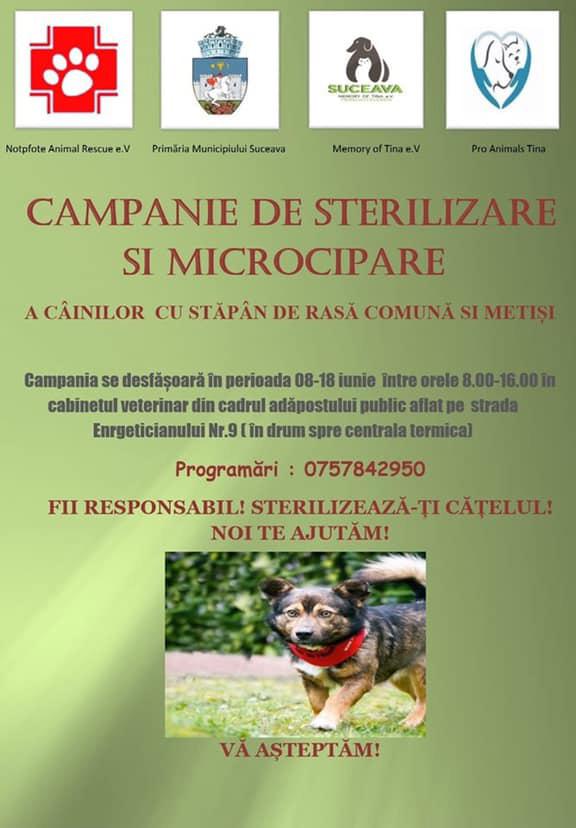 Campanie de microcipare și sterilizare a câinilor cu stăpân de rasă comună sau metiși