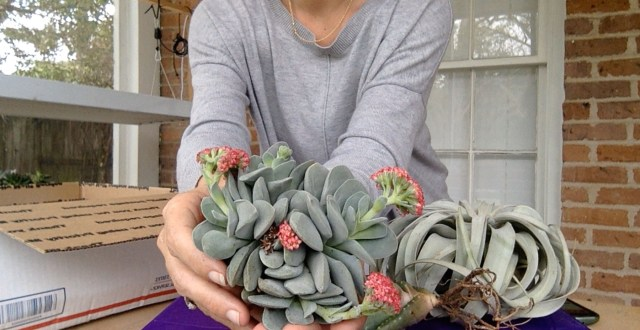 More Plant Mail! Another succulent unboxing video w/ Sucs for You!