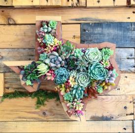 Fairyblooms loves Texas