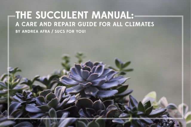 The Succulent Manual by Andrea Afra, Sucs for You!
