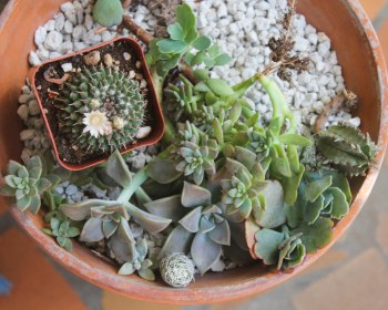 Small Variety Pack Succulents