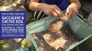 How to make succulent and cactus soil