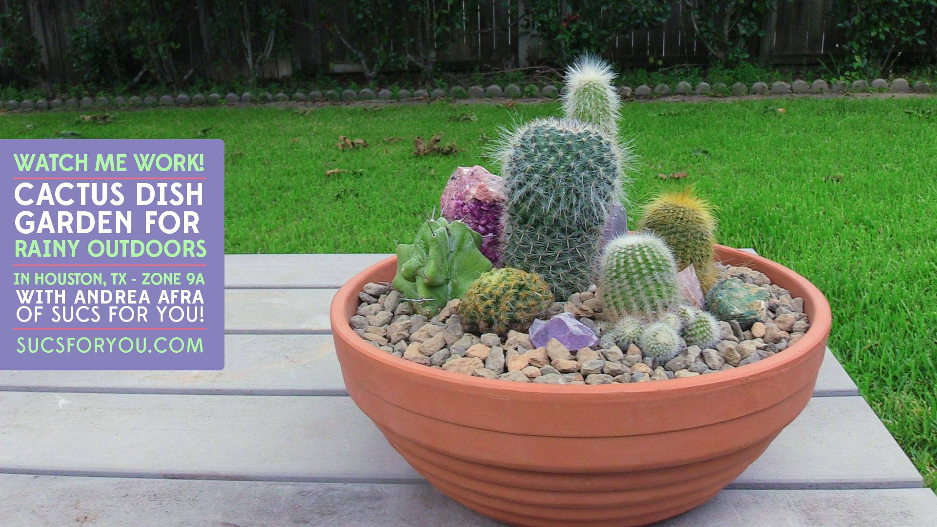 Cactus dish garden for rainy outdoors