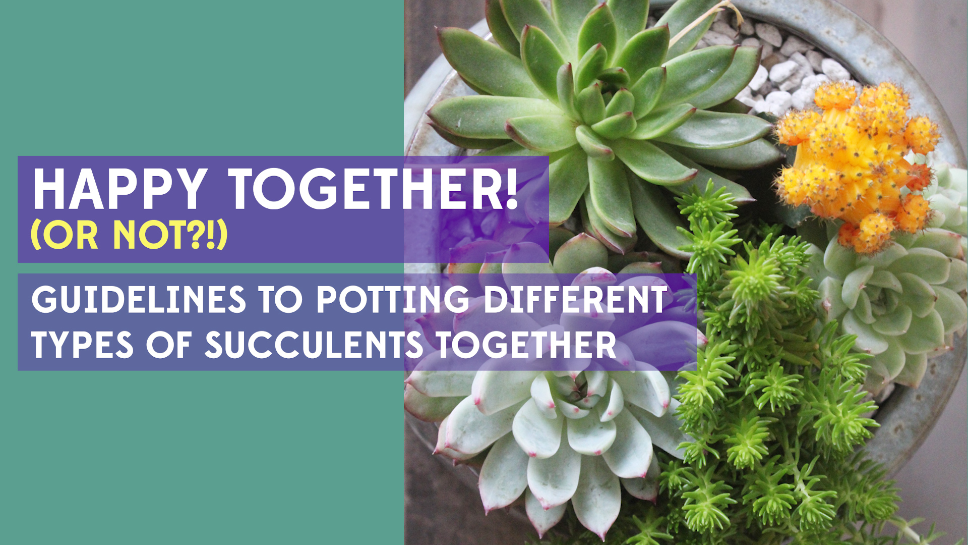 Potting different types of succulents together