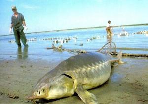 Zoznamka miesto POF veľa rýb