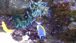 zoo-aquarium