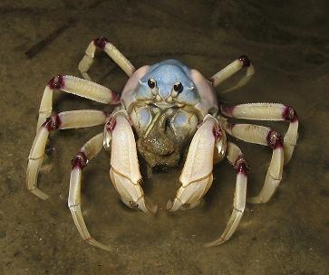 even%20our%20crustaceans%20are%20prettier
