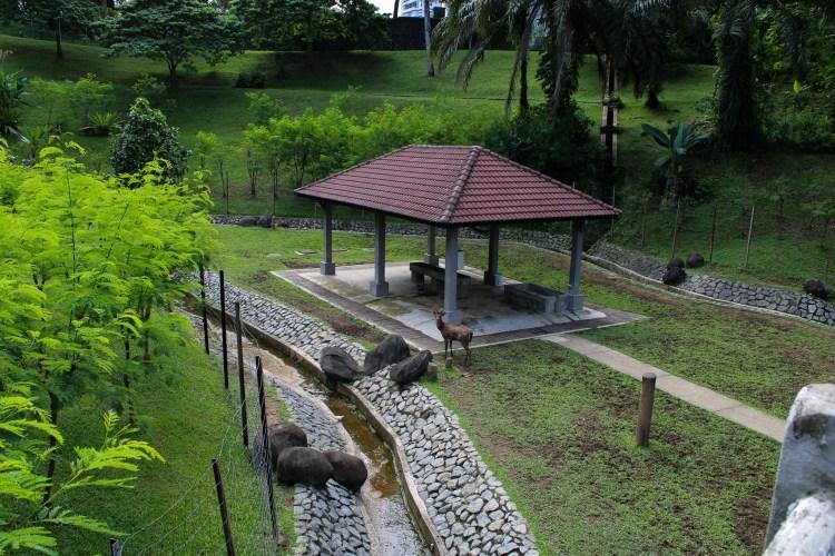 Deer park in Kuala Lumpur, a small deer is looking at the camera. kuala lumpur deer park