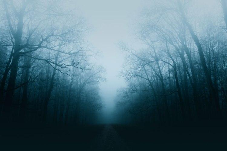 foggy road & dark forest