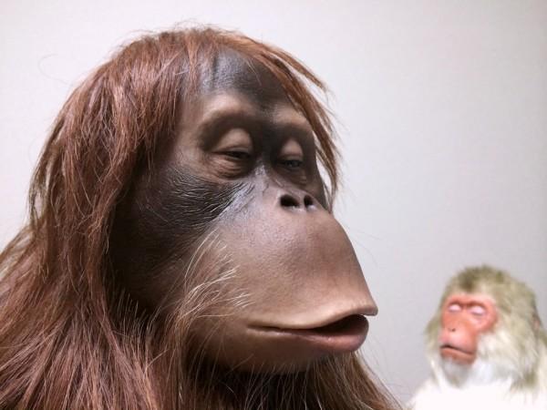 オランウータンのリアル彫刻,orangutan sculpture
