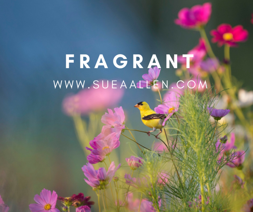 WHAT ARE YOU POURING OUT? FRAGRANT AROMA?