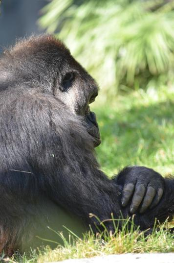 San Diego Zoo Anniversary Trip 072