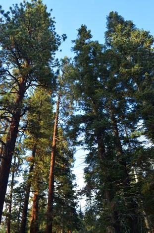 Mighty Trees (7)