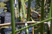 Critters in Oak Glen (2)