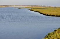 Bolsa Chica Wetlands (4)