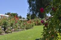 Huntington's Garden Colors (2)