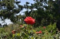 Huntington's Garden Colors (7)