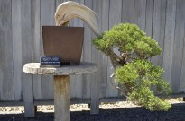 Japanese Garden at the Huntington (7)