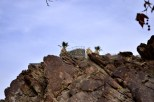 Hiking Andreas Canyon, part 1 of 2 (19)