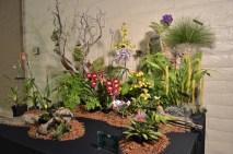 Orchids (3)