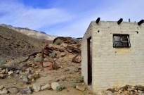 Reclaimed by the Desert (3)