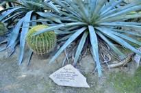Moorten's Botanical Garden, part 2 (7)